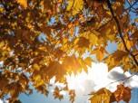 Можливі наслідки золотої осені